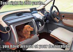 Dog holder!