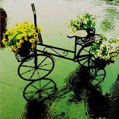 Três amores deste feriado: bike, chuva e flores. Foto de @brubittencourt http://instagr.am/p/LqRLM7Ha2K/