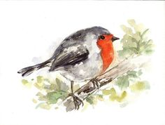ORIGINAL Watercolor Robin Bird Art Painting Animal by NuFineArt5