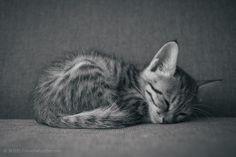 Silent Cat. -