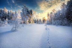 Contemplez les paysages finlandais à travers les photographies de Mikko