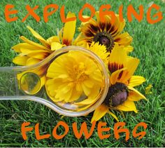The Golden Gleam: Exploring Flowers