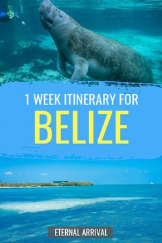 Planning a trip to Belize? This Belize itinerary helps you plan the perfect week in Belize, from the Belize Vacations, Belize Resorts, Belize Travel, Belize Honeymoon, Trip To Belize, Map Of Belize, Belize Diving, Honduras, Costa Rica
