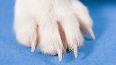 How to Turn My Dog's Paw Print Into a Tattoo | eHow