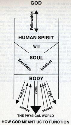 the dichotomy of body and soul in Question: trichotomy vs dichotomy of man—which view is correct answer: the bible teaches that humanity possesses a physical body, a soul, and a spirit in regards to how these aspects of the human nature connect with and relate to each other, there are four primary theories.