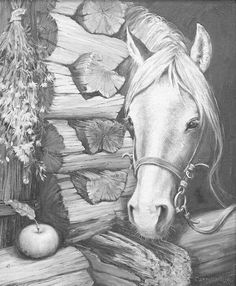How To Draw Horses Coloring Page Horse Coloring Pages, Adult Coloring Pages, Coloring Books, Colouring, Horse Drawings, Animal Drawings, Art Drawings, Equine Art, Horse Art