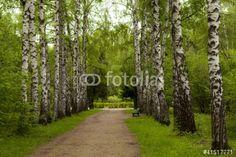 Obraz na płótnie Wiosna w lesie (41517771) #wf1642 - Obrazy na płótnie Pejzaże i widoki | Foteks