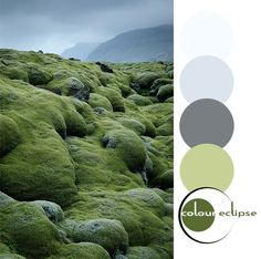 mossy lava fields with color palette, sherwin williams gray area, olive gray, olive green, moss green, blue-gray, gray-blue