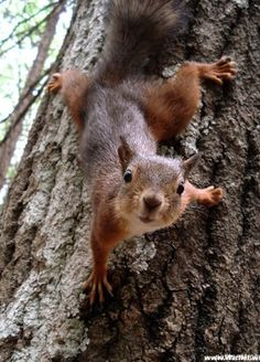 Action Squirrel posing for The Camera :))