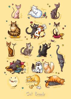 "Poster ""Cat Breeds"" A3 