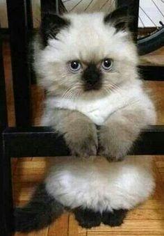 Future cat <3