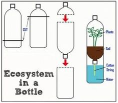 """Together all these living and non-living things interact with one another to create a system to sustain life. The term """"ecosystem"""" means an """"ecological"""" system.How to make a plant in the bottle: Illustration shows cutting the top of one bottl Preschool Science, Science Classroom, Teaching Science, Science For Kids, Earth Science, Science Activities, Ecosystem Activities, Science Penguin, Science Education"""