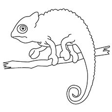 A Chameleon is an animal that changes its color to camouflage itself with its surroundings. Here are 10 free printable chameleon coloring pages for your kid