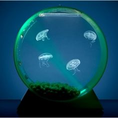 Jellyfish Tanks are the perfect accessory for any home office. So cool!!!