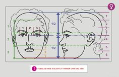 Anatomy Next - Anatomy of Head & neck: Proportions