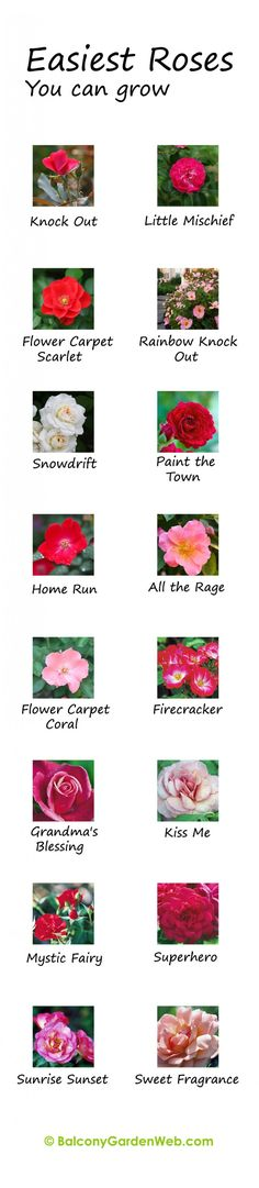 Make You Master in Growing Roses What are the easiest rose varieties? You might have known but the chart given here can be useful for you.What are the easiest rose varieties? You might have known but the chart given here can be useful for you. Fruit Tree Garden, Garden Trees, Fruit Trees, Balcony Garden, Roses Garden, Corner Garden, Garden Pool, Garden Web, Diy Garden