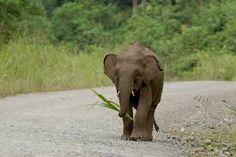 Image result for elephants