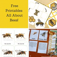 Hands on activities for learning about bees in the preschool and Montessori classroom. When you're working with preschoolers and young children, keep in mind that they need to have exposure to the real thing before working with abstract representations of it. This is particularly true for nature. Spend lots of time in nature. Get dirty, see …
