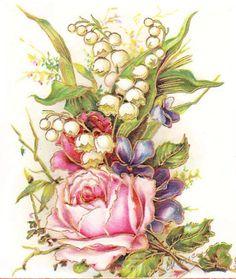 Rose, muguet, colorié
