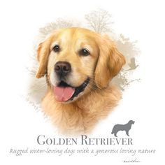 GOLDEN RETRIEVER dog fabric with Phrase Large door TheLonesomePet