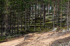 Rokua Geopark is Finland's first and the most northern UNESCO Global Geopark