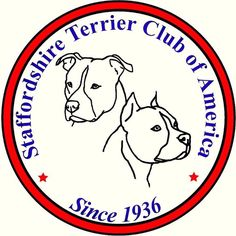 Staffie Club Best Dog Breeds, Best Dogs, American Staffordshire Terrier Puppies, Choosing A Dog, Training Your Dog, Training Tips, Purebred Dogs, American Pit, Pet Home