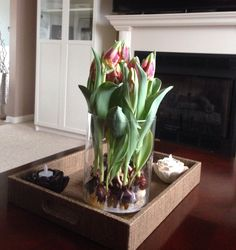 Tulip bulbs from Costco