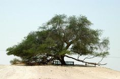 Energia Paulistânica: * Dez árvores especialíssimas