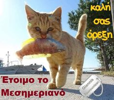 Good Morning, Cats, Greek, Animals, Buen Dia, Gatos, Animales, Bonjour, Animaux