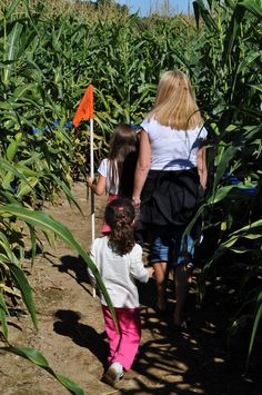 Apple And Pumpkin Picking, Corn Maze, Travel With Kids, Hay Rides, Couple Photos, Fun, Traveling, Couple Shots, Viajes
