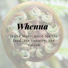 11 Beautiful Words That Will Make You Fall in Love With the Māori Language Words To Use, Big Words, Cool Words, Unique Words, Creative Words, Beautiful Words, Maori Words, Common Quotes, Traditional Names