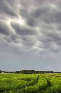 Mammatus Cloud - Mammatocumulus