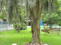 Discover the world through photos. Covington Louisiana, Covington La, Abita Springs, Lake Pontchartrain, Sweet Memories, North Shore, Best Vacations, Cities, Adventure