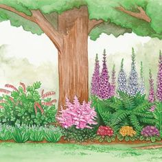 Deer resistent shade garden 1 bleeding heart 6 giant Lilly of valley 1 sate bells 3 primrose 1 lady fern 3 foxglove