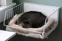 it never occurred to me to attach a cat bed to the wall. it never occurred to me to attach a cat bed to the wall. Diy Pour Chien, Catsu The Cat, Cat Hacks, Cat Diys, Cat Towers, Cat Shelves, Cat Enclosure, Cat Room, Cat Condo