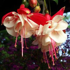 White and pink - just fuchsia!   Flickr - Photo Sharing!