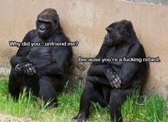 why, did, you, unfriend, me, you, retard, gorillas