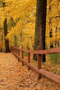 One day, I will walk with my husband around Thoreau's Walden Pond in Concord, MA, in autumn.