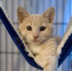 Ali (and Penelope) [4]  kitten