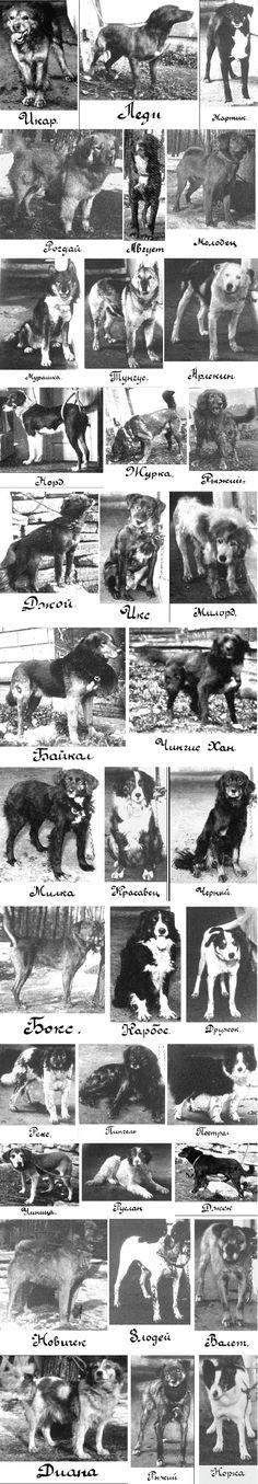 Pavlov's Actual Dogs