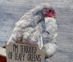 Raising chickens has gained a lot of popularity over the past few years. If you take proper care of your chickens, you will have fresh eggs regularly. You need a chicken coop to raise chickens properly. Farm Animals, Animals And Pets, Funny Animals, Cute Animals, Funny Animal Pictures, Dog Pictures, Chicken Coop Designs, Chicken Humor, Dog Shaming