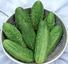 Russian Pickling cucumber: from Perm, Russia    www.seedsavers.org