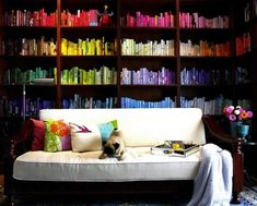 Bookshelf (with pug!) | 25 Soothing Collections Organized ByColor