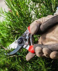 rozmaring metszése Pruning Shears, Garden Tools, Herbalism, Herbs, Gardening, Herbal Medicine, Gardening Scissors, Yard Tools, Lawn And Garden
