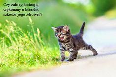 Wczesna #kastracja kotów