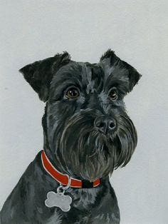"Awesome ""Standard Schnauzer"" detail is readily available on our site. Have a look and you wont be sorry you did. Schnauzer Noir, Black Mini Schnauzer, Schnauzer Art, Standard Schnauzer, Schnauzer Grooming, Animal Paintings, Animal Drawings, Dog Portraits, Dog Art"