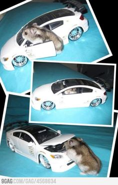Hamster got his own ride