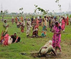 CASI 5 millones de árboles en un día: Bravo por India