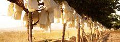 Виноград Виналопо Valley (Испания) созревает в бумажный пакет.