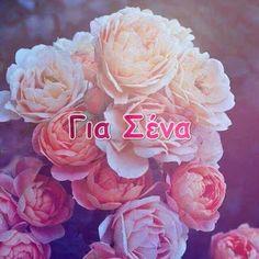 giortazo.gr: Για Σένα  ...giortazo.gr Love, Wallpaper, Instagram Posts, Flowers, Plants, Digital, Amor, Wallpapers, Plant